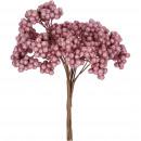 Berry branch